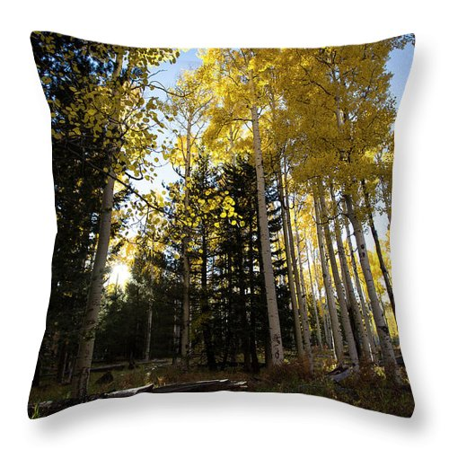 Arizona Throw Pillow featuring the photograph Autumn Peace by Cathy Franklin