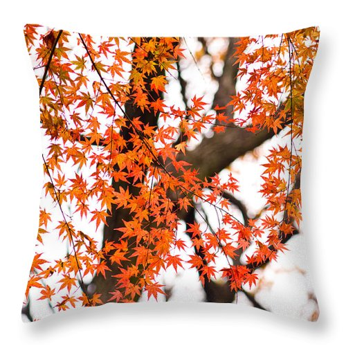 Autumn Throw Pillow featuring the photograph Autumn Red Leaves On A Tree  by U Schade