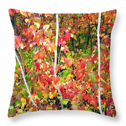 Autumn Throw Pillow featuring the photograph Autumn Sanctuary by Will Borden