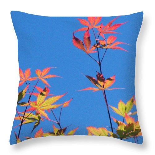 Landscape Throw Pillow featuring the photograph Autumn Skies by Dawn Marshall