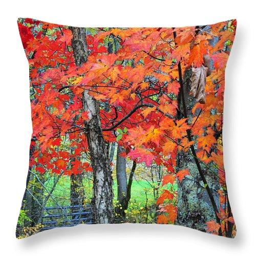 Autumn Throw Pillow featuring the photograph Autumn Sugar Maple by Thomas R Fletcher