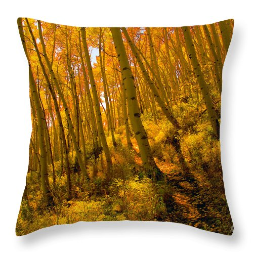 Autumn Throw Pillow featuring the photograph Autumn Trail by David Lee Thompson
