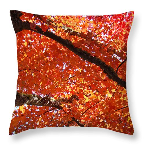 Nature Throw Pillow featuring the photograph Autumn Tree Art Prints Orange Red Leaves Baslee Troutman by Baslee Troutman