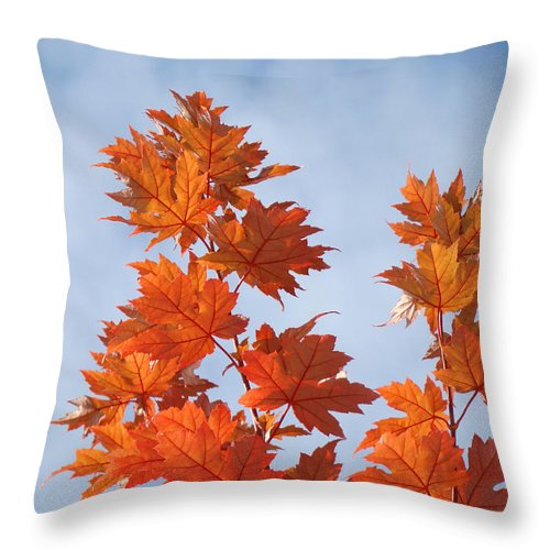 Autumn Throw Pillow featuring the photograph Autumn Tree Leaves Art Prints Blue Sky White Clouds by Baslee Troutman