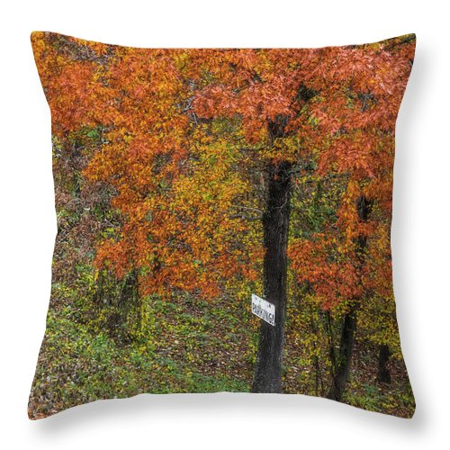 Tree Throw Pillow featuring the photograph Autumn Tree by Patricia Cale