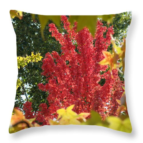 Autumn Throw Pillow featuring the photograph Autumn Trees Landscape Art Prints Canvas Fall Leaves Baslee Troutman by Baslee Troutman