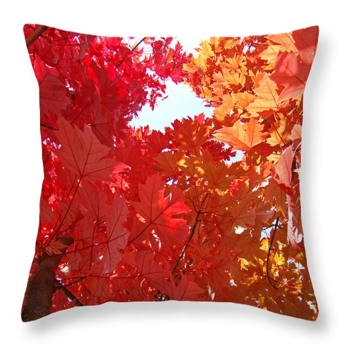 Autumn Throw Pillow featuring the photograph Autumn Trees Red Orange Fall Trees Art Baslee Troutman by Baslee Troutman