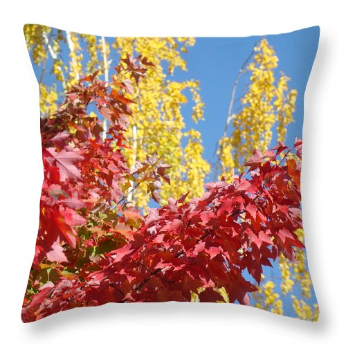 Autumn Throw Pillow featuring the photograph Autumn Trees Red Yellow Fall Tree Blue Sky Landsape by Baslee Troutman