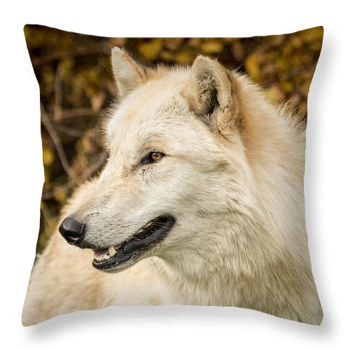 Grey Throw Pillow featuring the photograph Autumn Wolf by Pat Eisenberger