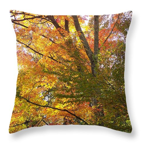 Autumn Throw Pillow featuring the photograph Autumn's Gold - Photograph by Jackie Mueller-Jones