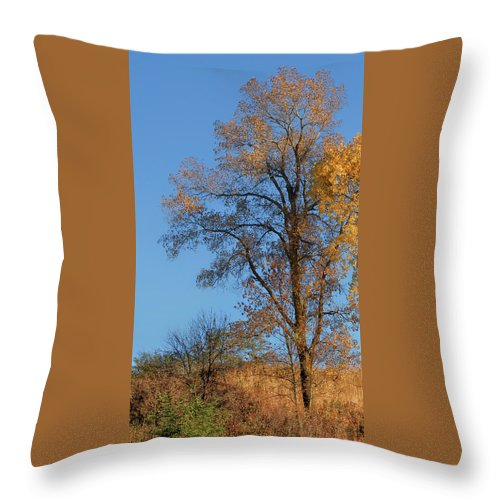 Autumn Throw Pillow featuring the photograph Autumn's Gold - No 2 by Nikolyn McDonald