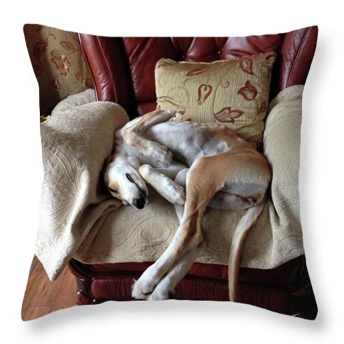 Persiangreyhound Throw Pillow featuring the photograph Ava - Asleep On Her Favourite Chair by John Edwards