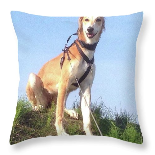 Salukilove Throw Pillow featuring the photograph Ava-grace, Princess Of Arabia  #saluki by John Edwards