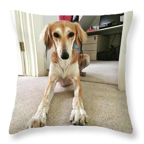 Persiangreyhound Throw Pillow featuring the photograph Ava On Her First Birthday #saluki by John Edwards