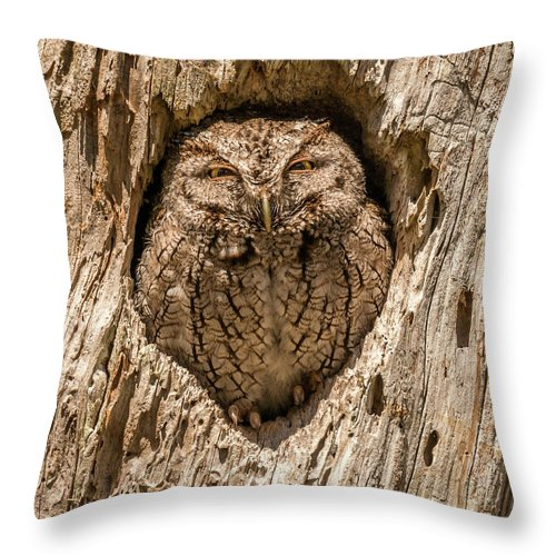 Bird Throw Pillow featuring the photograph Awareness by David Kulp