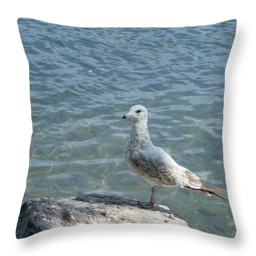 Birds Throw Pillow featuring the photograph Away From The Crowd by Peggy King