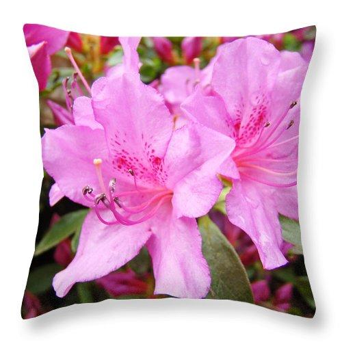 Azalea Throw Pillow featuring the photograph Azalea Garden Art Prints Pink Azaleas Flowers Baslee Troutman by Baslee Troutman