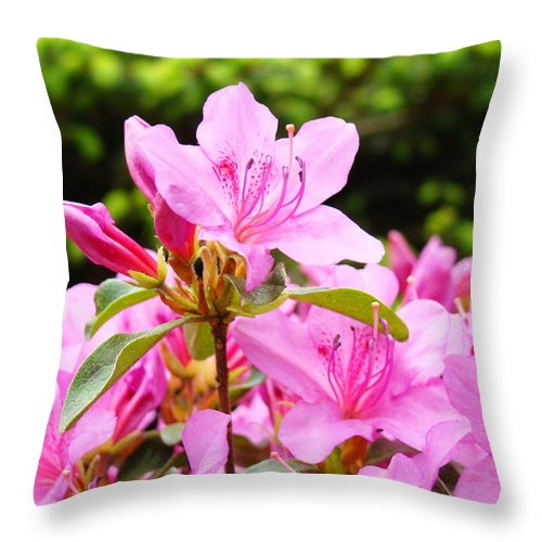 �azaleas Artwork� Throw Pillow featuring the photograph Azaleas Pink Azalea Flowers Artwork 12 Landscape Art Prints by Baslee Troutman