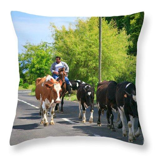 Agriculture Throw Pillow featuring the photograph Azorean Farmer by Gaspar Avila