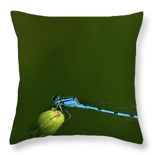Azure Damselfly Throw Pillow featuring the photograph Azure Damselfly-coenagrion Puella by Onyonet Photo Studios