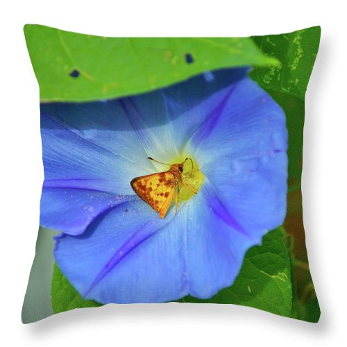 Flower Throw Pillow featuring the photograph Azure Morning Glory by Henri Irizarri
