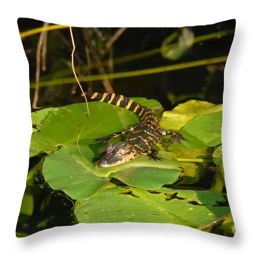 Baby Throw Pillow featuring the photograph Baby Alligator by David Lee Thompson