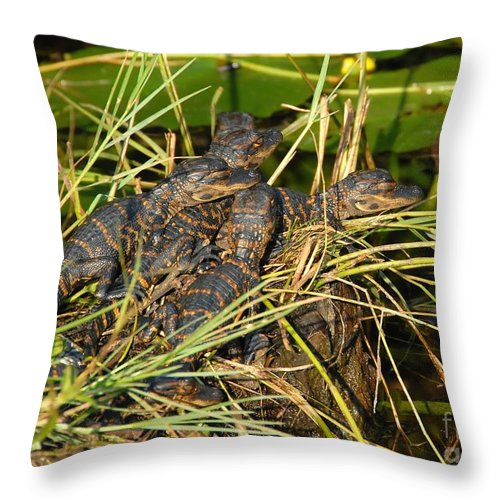 Alligators Throw Pillow featuring the photograph Baby Alligators by David Lee Thompson