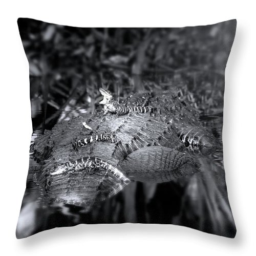 Alligator Throw Pillow featuring the photograph Baby Alligators On Board by Mark Andrew Thomas