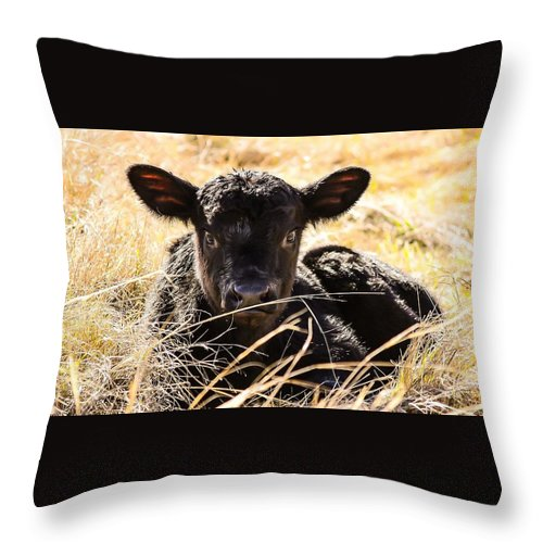 Baby Throw Pillow featuring the photograph Baby Angus Calf Hideaway by Jeanie Mann