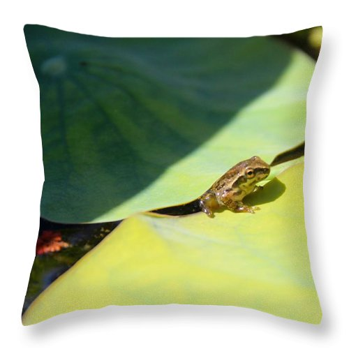 Frog Throw Pillow featuring the photograph Baby Baja Tree Frog Emerges From Lotus Leaf by Deanne Rotta