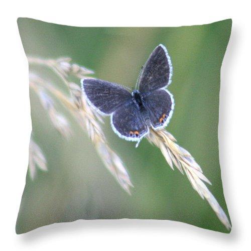 Bug Throw Pillow featuring the photograph Baby Blue by David Dunham