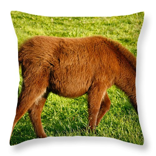 Animals Throw Pillow featuring the photograph Baby Donkey by Gaspar Avila