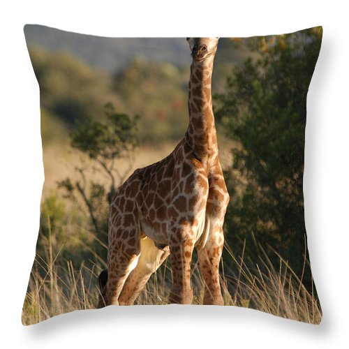 Giraffe Throw Pillow featuring the photograph Baby Giraffe by Andy Smy