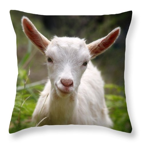 Animals Throw Pillow featuring the photograph Baby Goat by Gaspar Avila