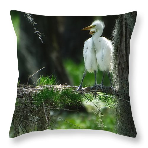 Egret Throw Pillow featuring the photograph Baby Great Egrets With Nest by Rich Leighton