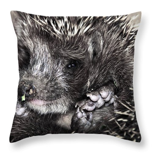 Animal Throw Pillow featuring the photograph Baby Hedgehog by Svetlana Sewell