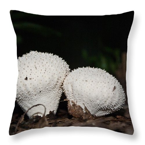 Puffballs Throw Pillow featuring the photograph Baby Puffballs by Douglas Barnett