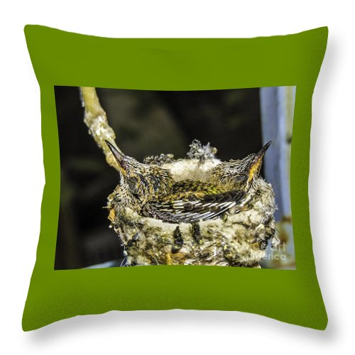 Day 12 Hummingbird Babies Throw Pillow featuring the photograph Baby Rufous Hummingbirds by The Follmers