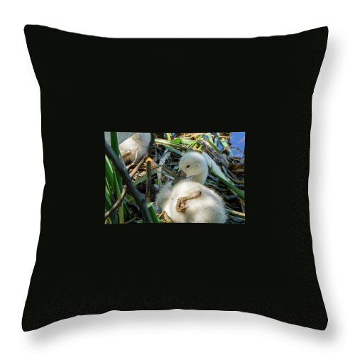 Swan Throw Pillow featuring the photograph Baby Swan Resting by Linda Howes