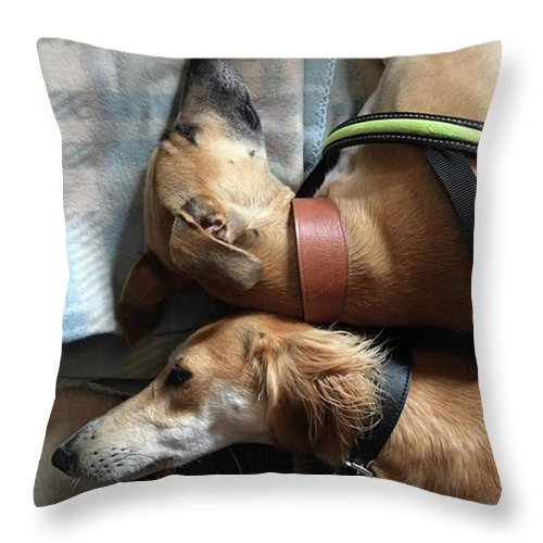 Persiangreyhound Throw Pillow featuring the photograph Back 2 Back - Ava And Finly Relaxing At by John Edwards