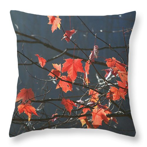 Fall.nature Throw Pillow featuring the photograph Back Light Mapel by Itai Minovitz