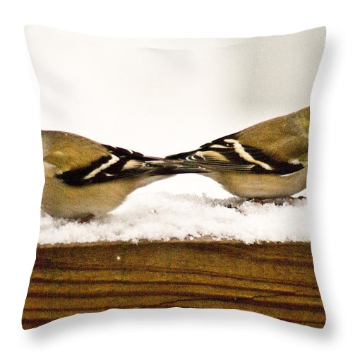 American Throw Pillow featuring the photograph Back To Back American Gold Finches by Douglas Barnett