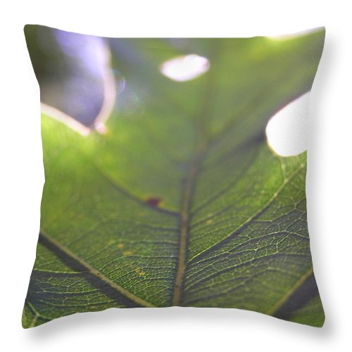 Leaf Green Light Backlit Dustin Ryan Blue Ridge Mountians Abstract Throw Pillow featuring the photograph Backlit Leaf by Dustin K Ryan