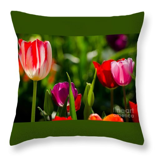 Oregon Throw Pillow featuring the photograph Backlit by Nick Boren