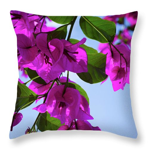 Flowers Throw Pillow featuring the photograph Backlit by Ric Schafer