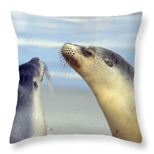 Sea Lion Throw Pillow featuring the photograph Backtalk by Mike Dawson