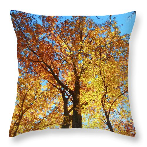 Nature Throw Pillow featuring the photograph Backyard Beauty by Roger Bester