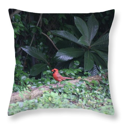 Red Throw Pillow featuring the photograph Backyard Friend by John W Smith III