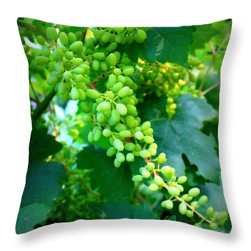 Grapes Throw Pillow featuring the photograph Backyard Garden Series - Young Grapes by Carol Groenen