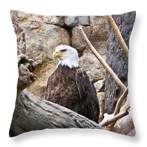 Bald Throw Pillow featuring the photograph Bald Eagle - Portrait by Douglas Barnett